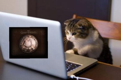 gato trabajando